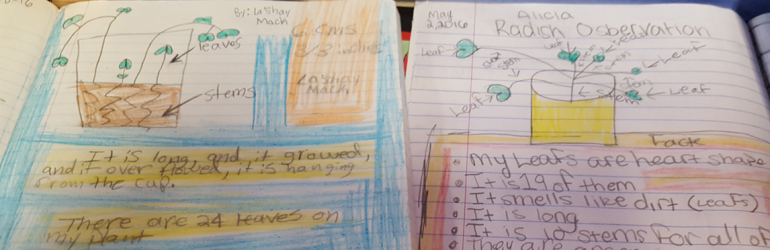 Header image of a student's notes about plants